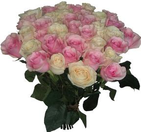 Нежный Букет из 25 Роз
