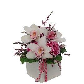 Волшебство орхидеи