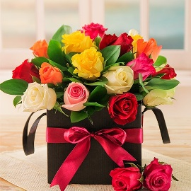 Colour Splash on 21 Roses