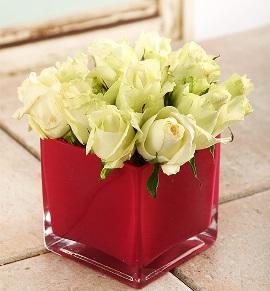15 Roses in Red Vase
