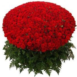 Կարմիր Գեղեցկությունը հենց  Քեզ համար