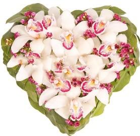 Романтика Чудесных Орхидей