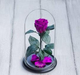 Eternal Pink Rose