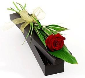 A Single Rose in Presentation Box