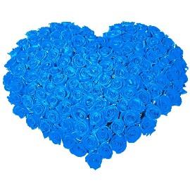 101 կապույտ վարդերով սիրտ