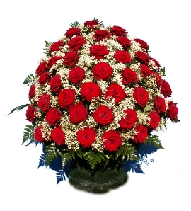 100 Sympathy Red Roses