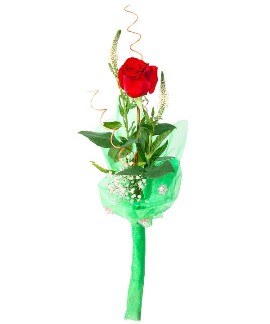 Red Rose in Green Wrapping
