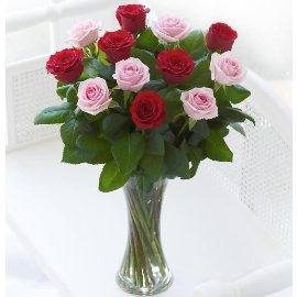 15 Red & Pink Roses