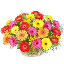 Blooming Basket of Gerberas