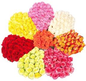 301 վարդերի գունապնակ