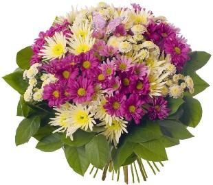 Grace of Chrysanthemums