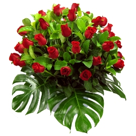 51 Հիանալի Կարմիր Վարդեր