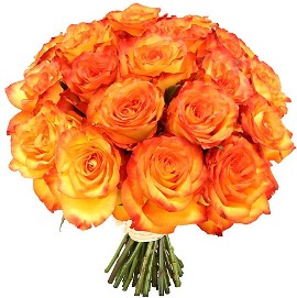 Majestic Orange Roses