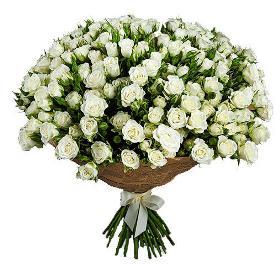 Փնջային Սպիտակ Վարդեր