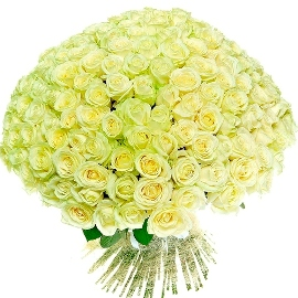 101 Սքանչելի սպիտակ վարդեր